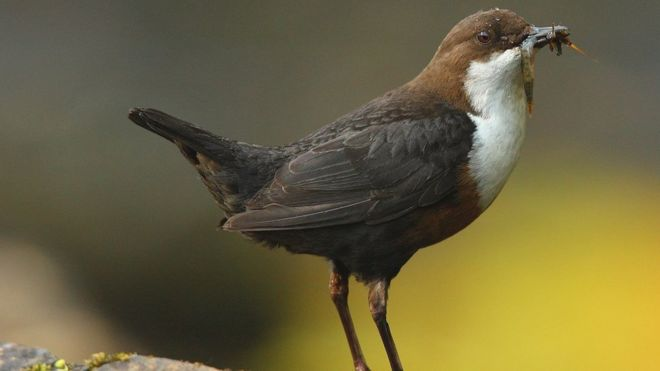 Pollution: Birds 'ingesting hundreds of bits of plastic a day