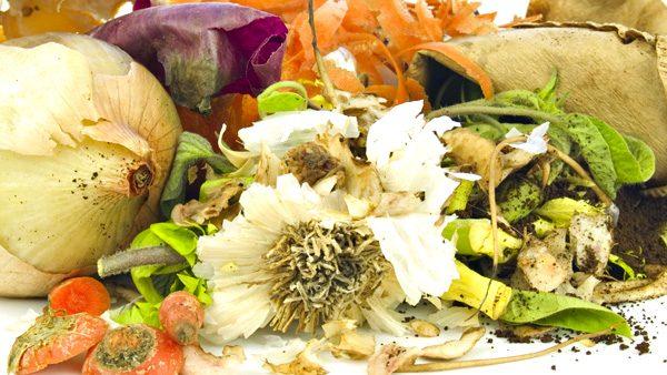 Food waste, Vegetable peelings for the brown bin